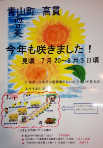 高貫向日葵