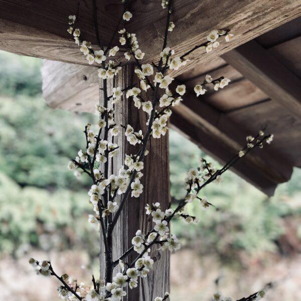 Photo 2018-03-03 15 17 08